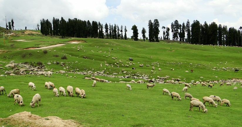 Gürcüstanda azərbaycanlı çoban itkin düşüb