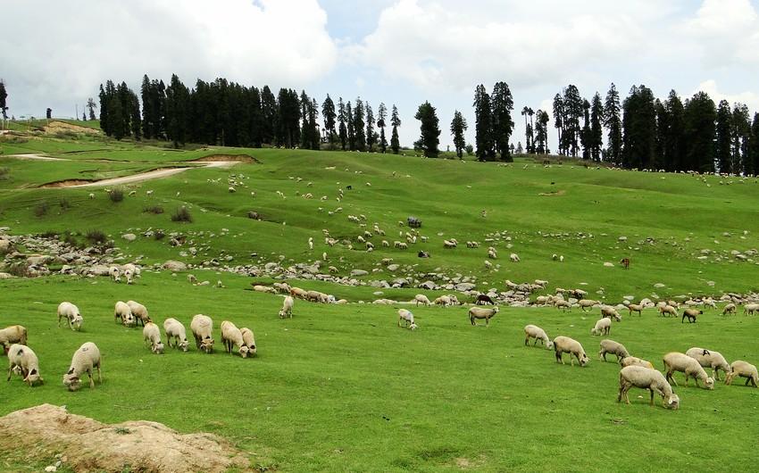 Azerbaijani shepherd missing in Georgia