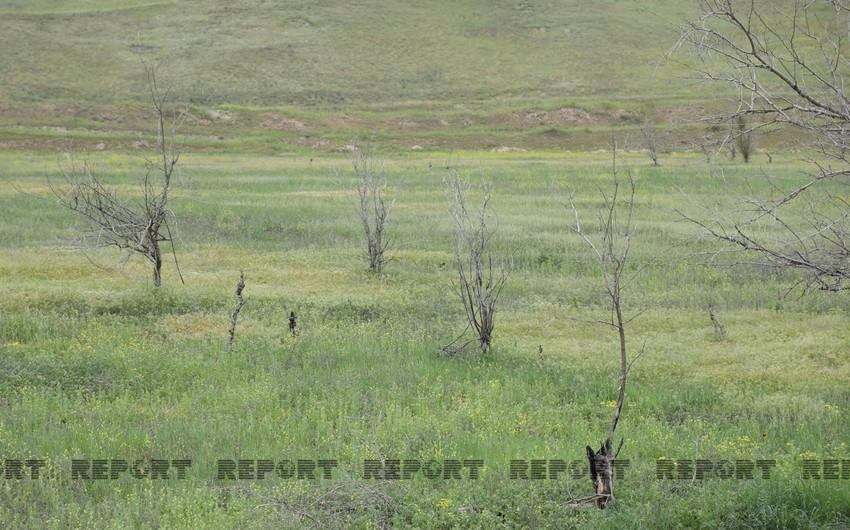Вырубленные и заминированные армянами гектары садов
