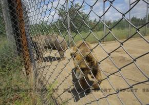 Tbilisi zooparkının sevimli və nəcib sakinləri - Azərbaycanın hədiyyəsi - VİDEOREPORTAJ