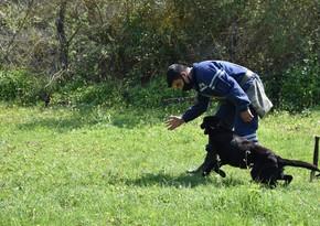 Министерство обороны Турции подарило МЧС собак-саперов