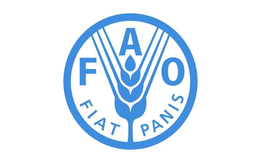 Azərbaycan FAO ilə əməkdaşlığını genişləndirir