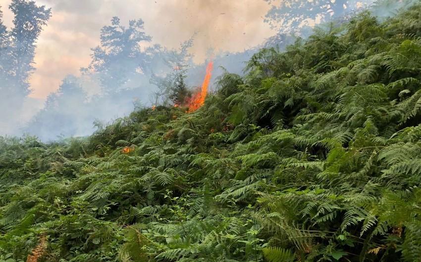 Ekologiya və Təbii Sərvətlər nazirinin müavini Yardımlıda meşə yanğını baş verən əraziyə gedib