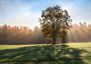 Sabaha gözlənilən hava proqnozu açıqlandı