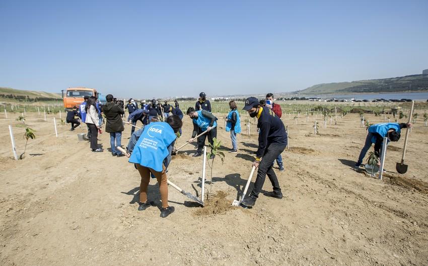 ETSN-in, IDEA İB-in və DGK-nin iştirakı ilə 1 600-dən çox ağac əkilib