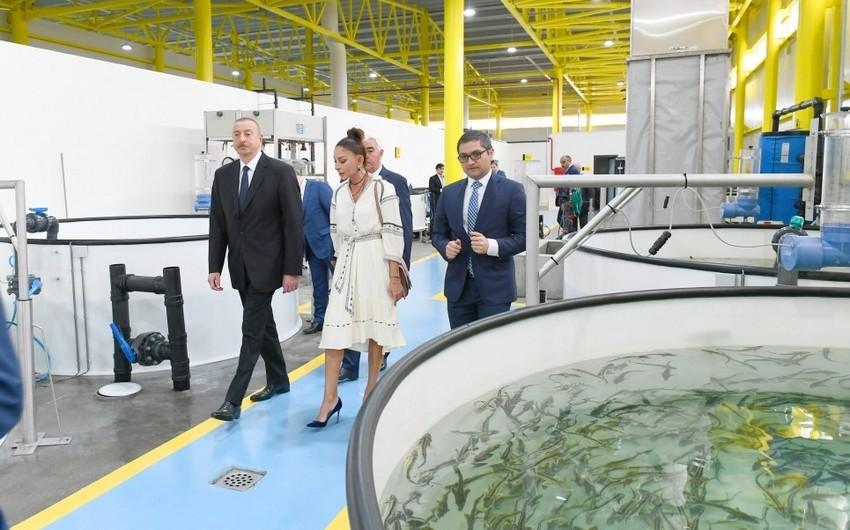"""Prezident """"NərəMİZ"""" balıqyetişdirmə zavodunun istehsalat prosesi ilə tanış olub - YENİLƏNİB"""