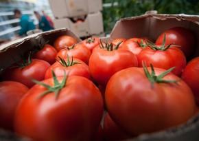 AQTA pomidor ixracı ilə məşğul olan bəzi sahibkarların suallarına aydınlıq gətirib