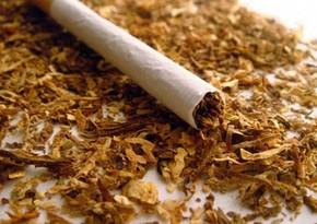 Bu il Azərbaycan tütün idxalına çəkdiyi xərci 34% artırıb