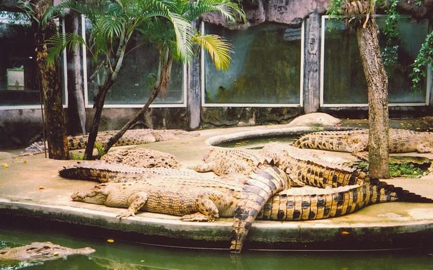 В Китае из зоопарка сбежали 78 крокодилов