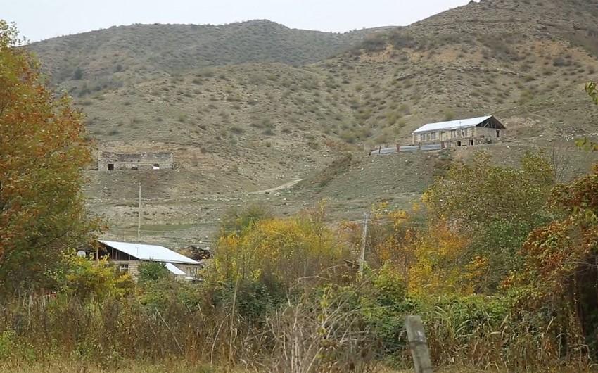 МЭПР: Армяне уничтожили в Губадлы восточные чинары возрастом 150-300 лет