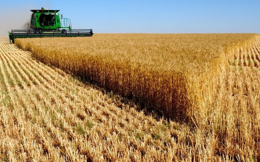 Ötən ilin yanvar-noyabr aylarında Azərbaycan Qazaxıstandan 73 min ton buğda idxal edib