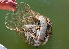 Azərbaycanda balıqçılığın inkişafı ilə bağlı müzakirələr aparılıb
