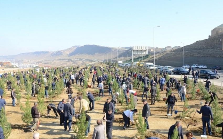 Baş Nazirin müavini: 650 min ağac əkmək aksiyası möhtəşəm xalq hərəkatına çevrildi