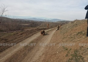 2292 hectares of land in liberated areas cleared of mines