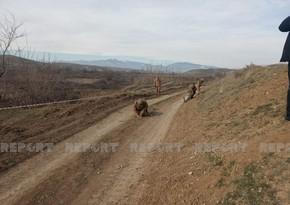 İşğaldan azad edilən ərazilərdə 2292 hektar sahə minalardan təmizlənib