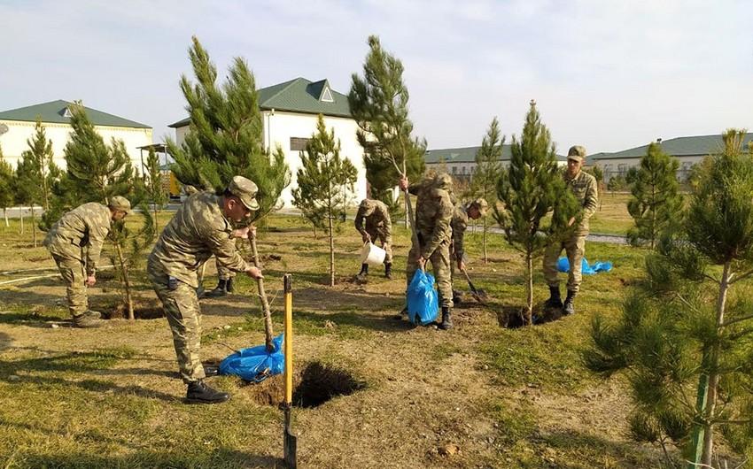 Azərbaycan Ordusunda ağacəkmə aksiyası keçirilir