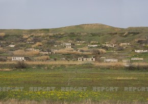 Azerbaijan to establish animal disease-free zones in liberated areas