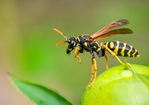 Scientists develop antibiotic from bee venom