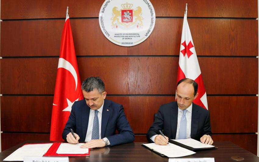 Tbilisidə Azərbaycan, Türkiyə və Gürcüstan arasında fındıqçılıq sahəsində əməkdaşlıq müzakirə edilib