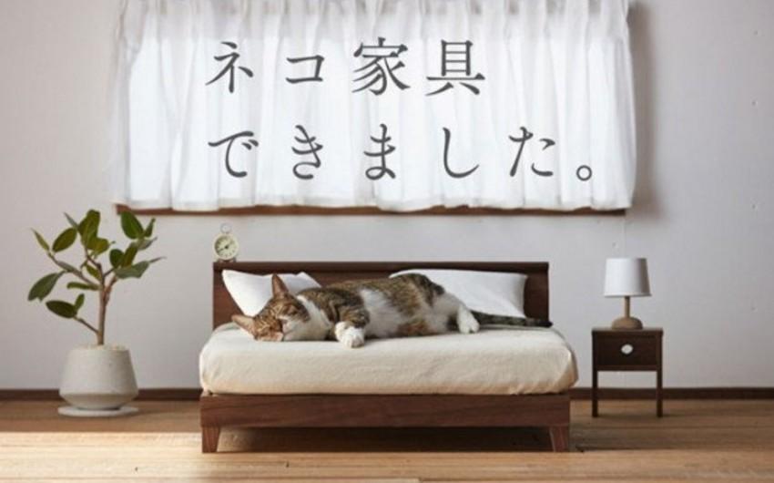 Yaponiyada pişiklər üçün mebel kolleksiyası hazırlanıb