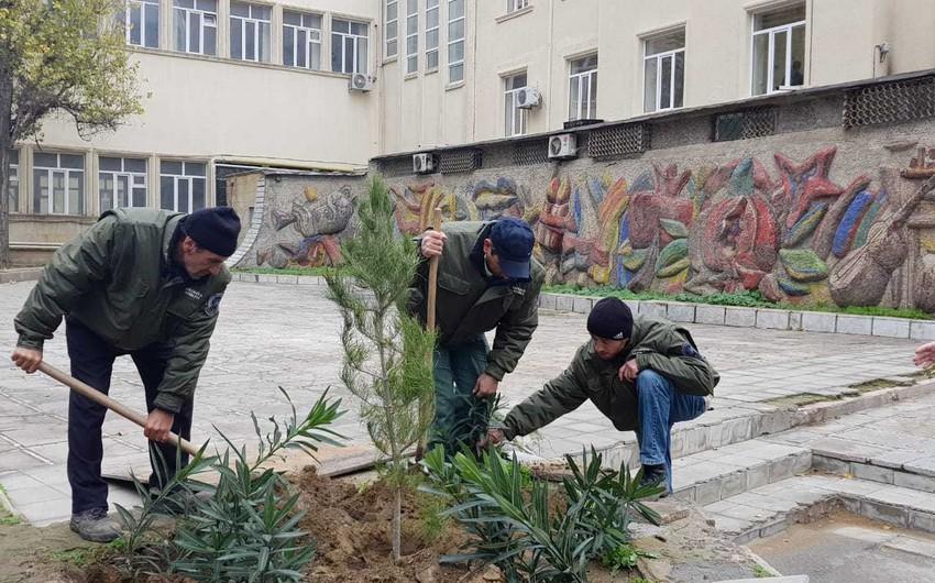 Bakıda qurumuş və təhlükə yaradan ağaclar 2000-dən çox müxtəlif cinsli ağacla əvəzlənib