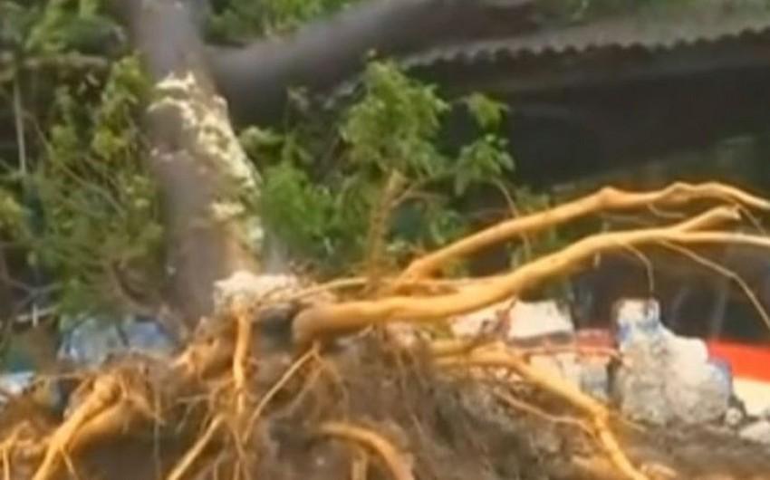 Hindistanda onlarla insan siklonun qurbanı olub