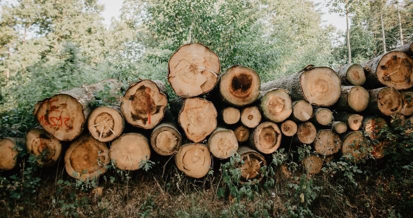 Qanunsuz yolla əldə edilən meşə materialı aşkar olunub