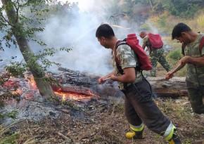 В Джалилабаде вспыхнул пожар в лесном массиве
