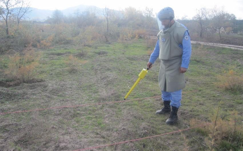 Cocuq Mərcanlıda gün ərzində 4 hektardan çox ərazi təmizlənib