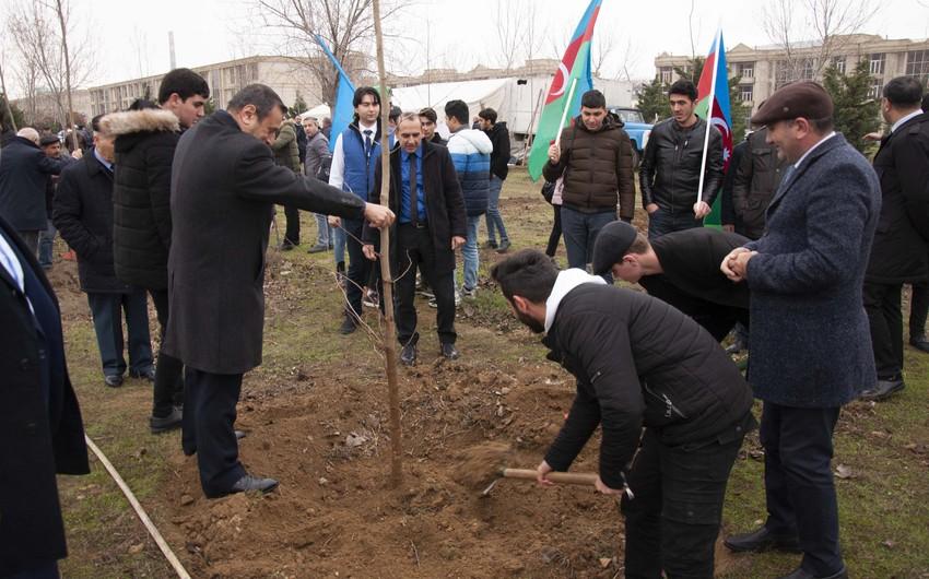 Nərimanov rayonunda 2500 ağac əkilib