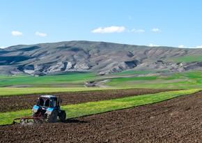 Аграрный сектор в Азербайджане вырос на 1,5%