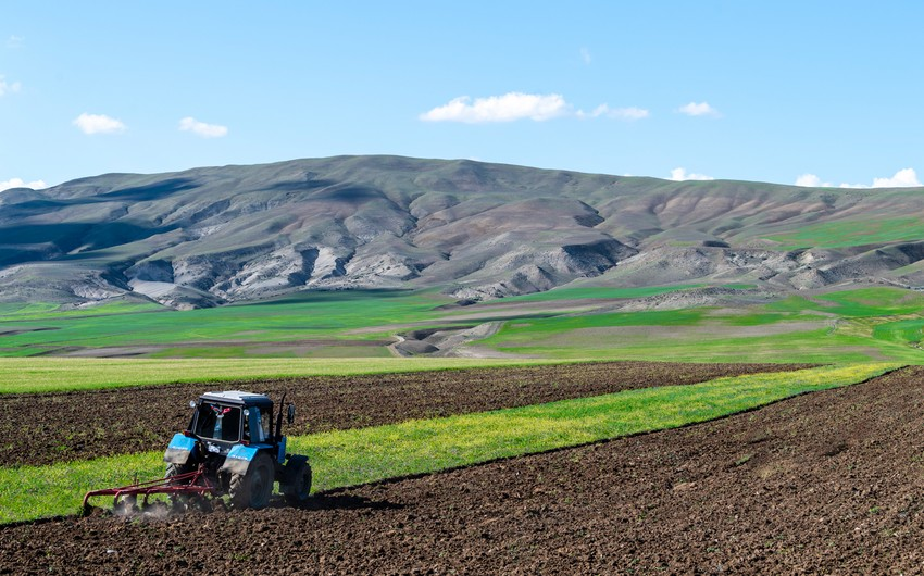 Azərbaycanda aqrar sektor 1,5% böyüyüb