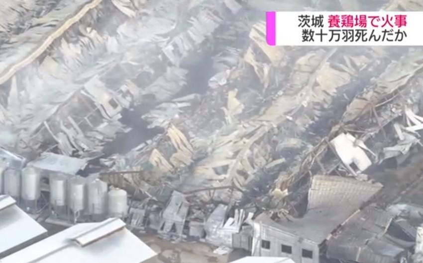Yaponiyada quşçuluq fermasında yanğın zamanı on minlərlə cücə tələf olub