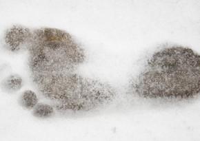 В США вознаграждение за поимку снежного человека увеличили до $2,1 млн