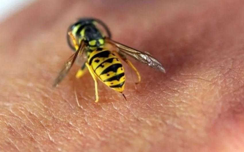 Tovuzda arının sancdığı qadın ölüb