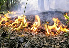 Fire breaks out in mined forest area in Fuzuli district