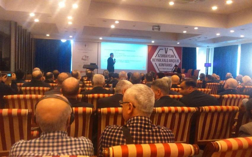 Bakıda V Azərbaycan Beynəlxalq Arıçılıq Konfransı keçirilir