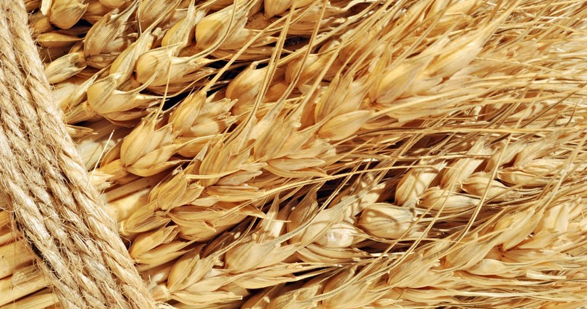Азербайджан увеличил импорт пшеницы на 15%