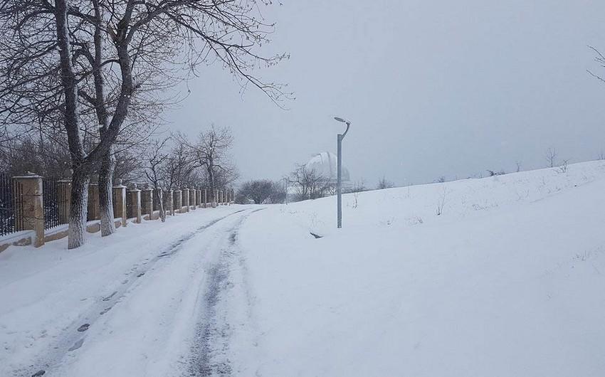 Сильный снегопад в Шамахе нанес ущерб цветущим фруктовым деревьям - ФОТО