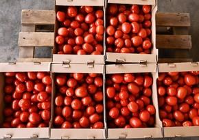 Rusiya Azərbaycanın bir sıra müəssisələrindən pomidor idxalına icazə verib