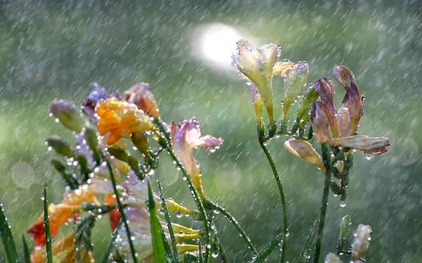 Proqnozlar Bürosu: Növbəti iki gündə arabir yağış yağacağı gözlənilir