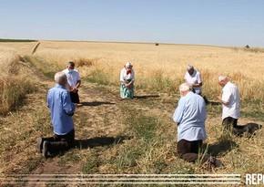 Интересная традиция в единственном колхозе Азербайджана - ВИДЕО