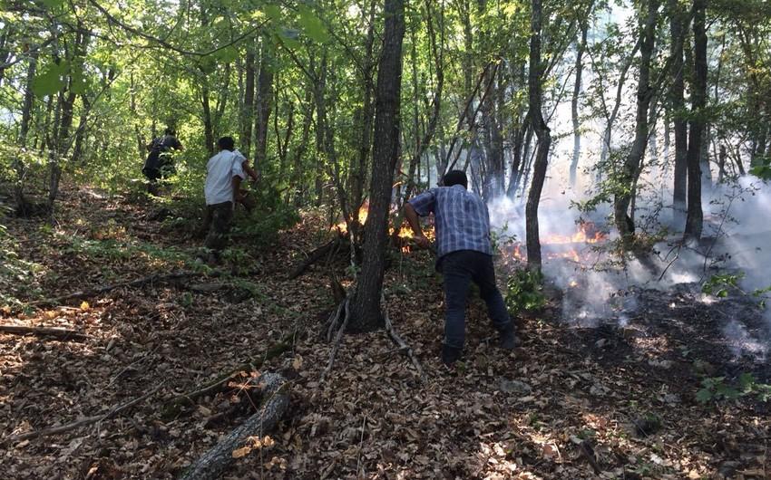 ETSN: Havanın isti və küləkli olması Altıağac Milli Parkının ərazisinə keçən yanğının söndürülməsində çətinliklər yaradır