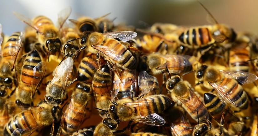 Bəzi bölgələrdə arı ailələrinin kütləvi ölümü baş verib
