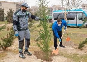 """BŞİH və """"Regional İnkişaf"""" İB-nin birgə təşkilatçılığı ilə ağacəkmə aksiyası keçirilib"""