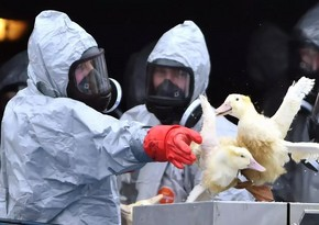 Украина сообщила о вспышке птичьего гриппа