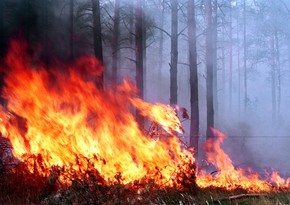 Over 180 people suffer in Turkey forest fire