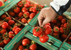 Russia announces terms of tomato import from Turkey