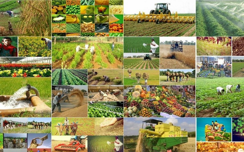 Azerbaijan to host Ministerial Meeting on Agriculture of ECO Member States
