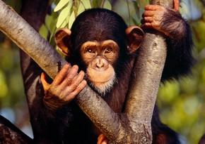 В Индии полиция задержала приучивших обезьян к воровству мошенников